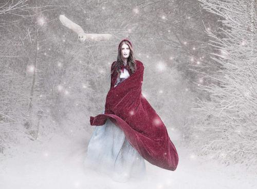 12 winter is coming by Lorraine Hardy
