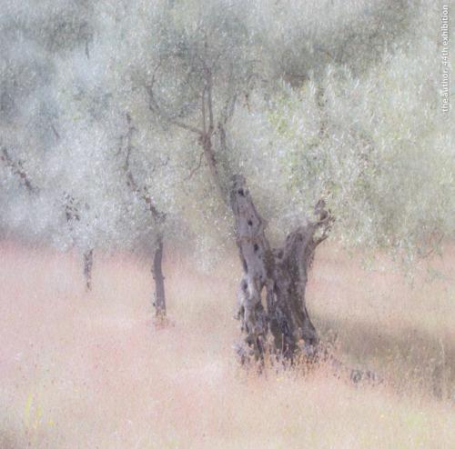 FIAP Ribbon Olive Trees Irene Froy