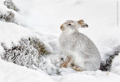 PAGB Gold-Surviving in Deep Snow-Gianpiero Ferrari FRPS APAGB FBPE EFIAP-England