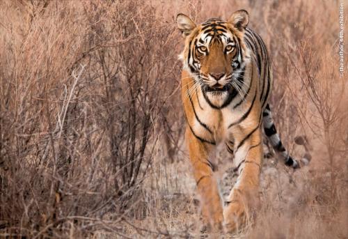 SAndie Cox Medal Emerging Tigress Janny Webster